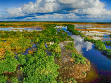 Florida Reise Everglades