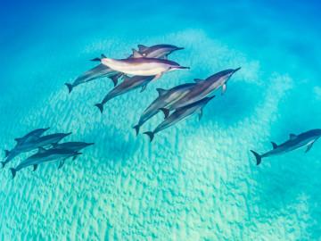 Hawaii Urlaub Delfine