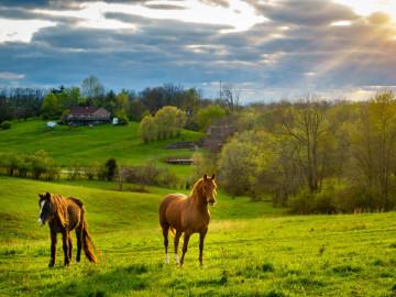 USA Reise Südstaaten Farm