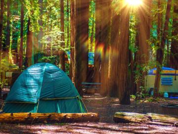USA Reise Redwood