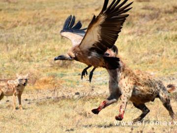 Serengeti National Park, Tansania; CC: afromaxx