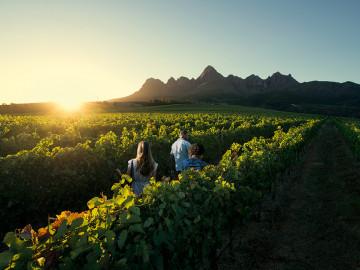 Weinfelder - Copyright South Africa