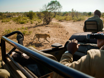 Leopard bei Safari - Copyright South Africa