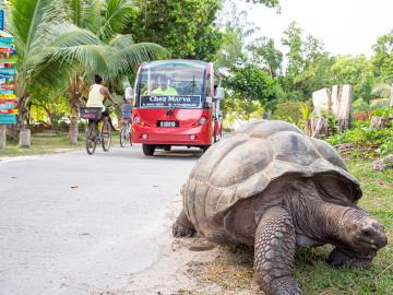 Riesenschildkröte in La Digue - Copyright Michel Denousse Tourism Seychelles