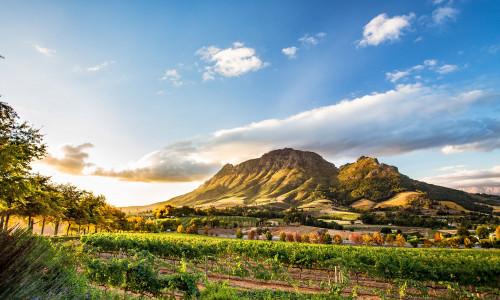 Weinregion Südafrika, Abendsonne Berge